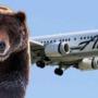 İniş Yaparken Ayıya Çarpan Uçak:  Dünyada İlk Kez!